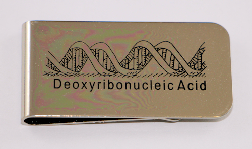 DNA Money Clip